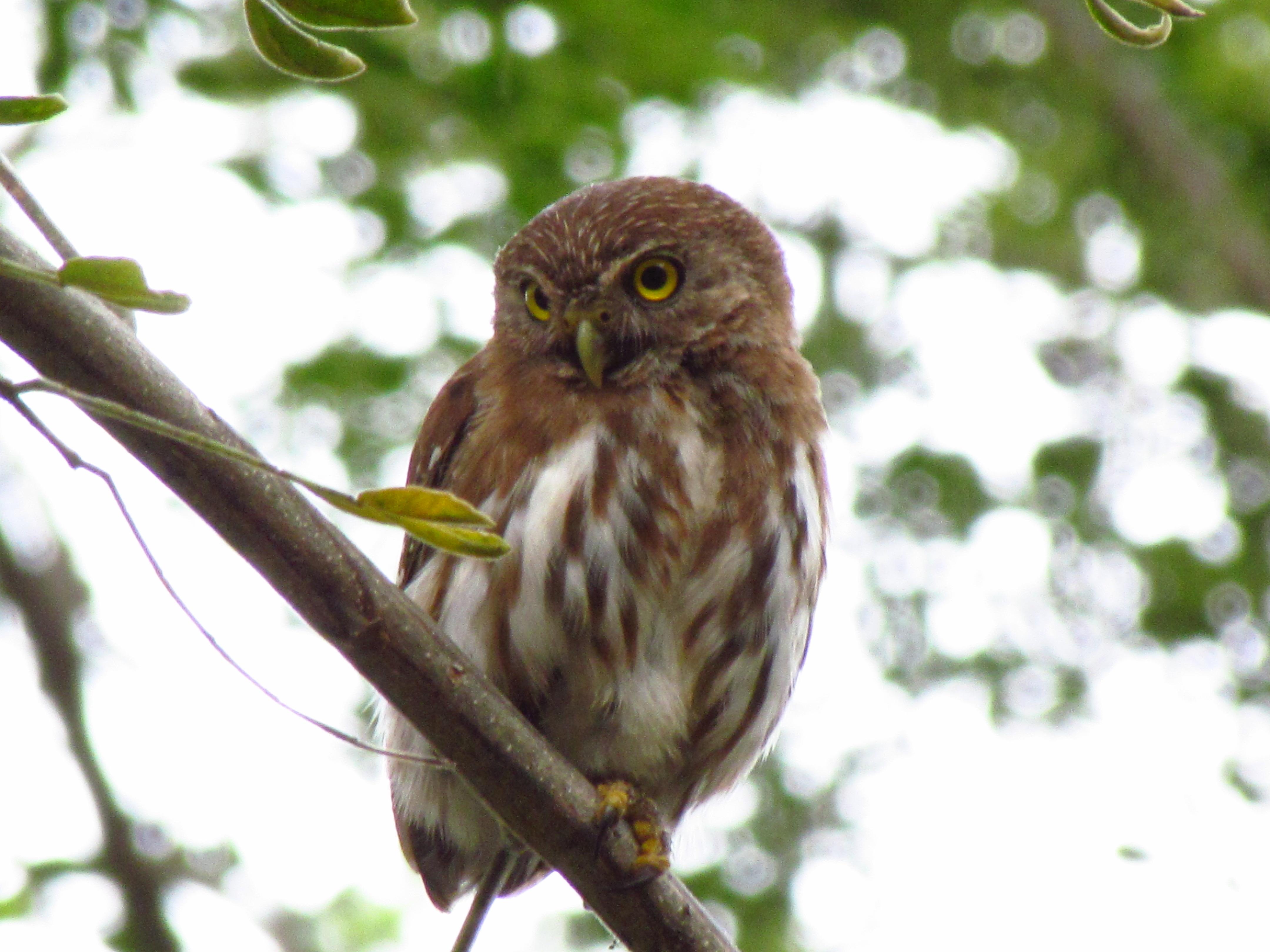 Muchas especies de aves se encuentran en este territorio que ahora será protegido gracias a la iniciativa de ACHSA.
