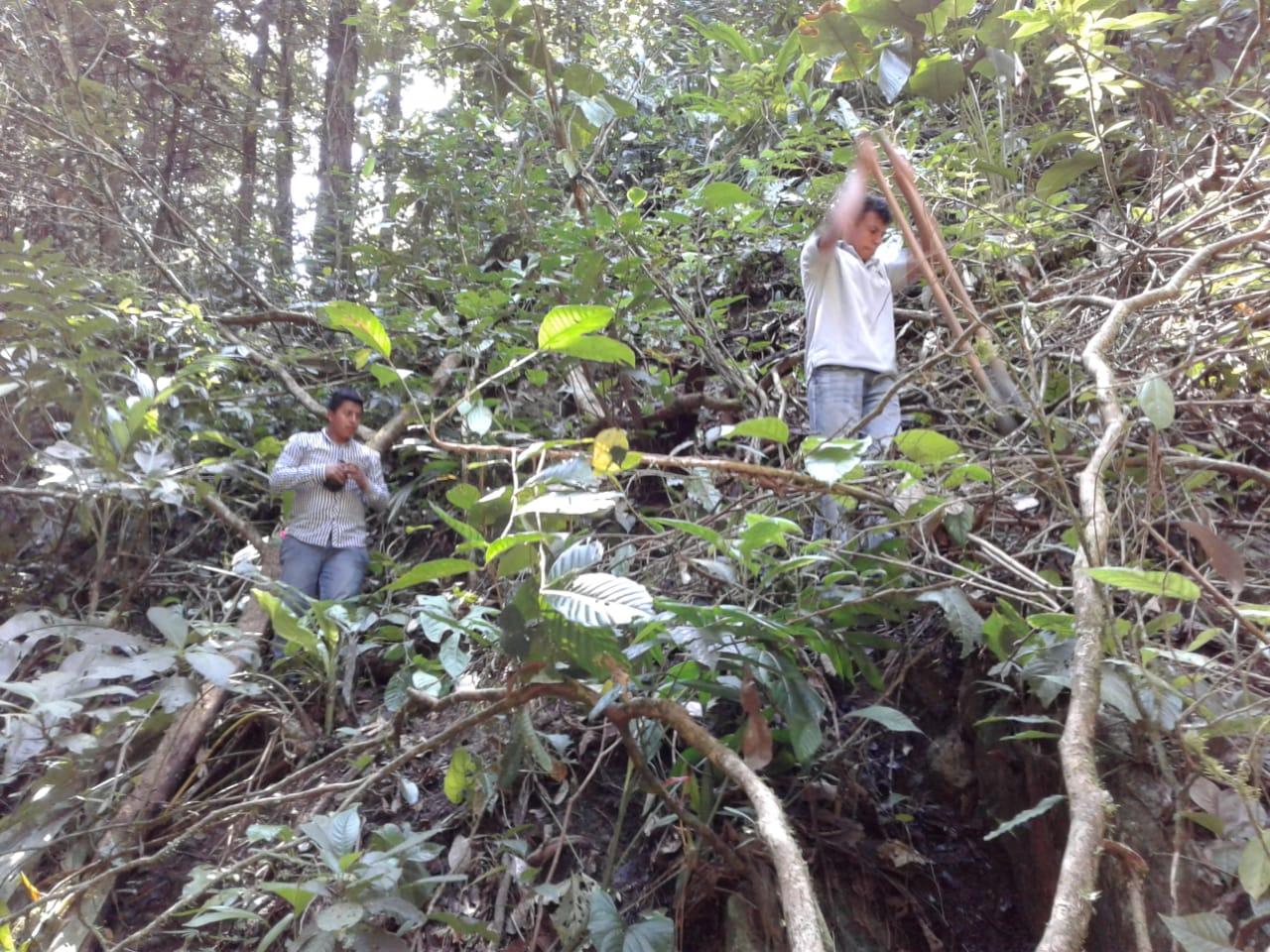 Al ser donados los árboles, los colaboradores de la zona comenzaron con la reforestación en Astillero, Lean.